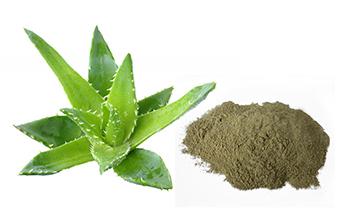 Aloe-Vera-powder-Main