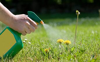 Fungicides-and-Pesticides-Main