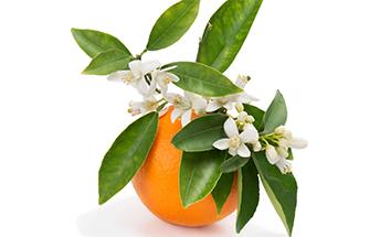 Orange-blossoms-Main