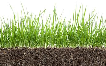 Organic-Soil-Stimulants-Main
