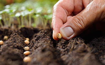 Seeds-Main